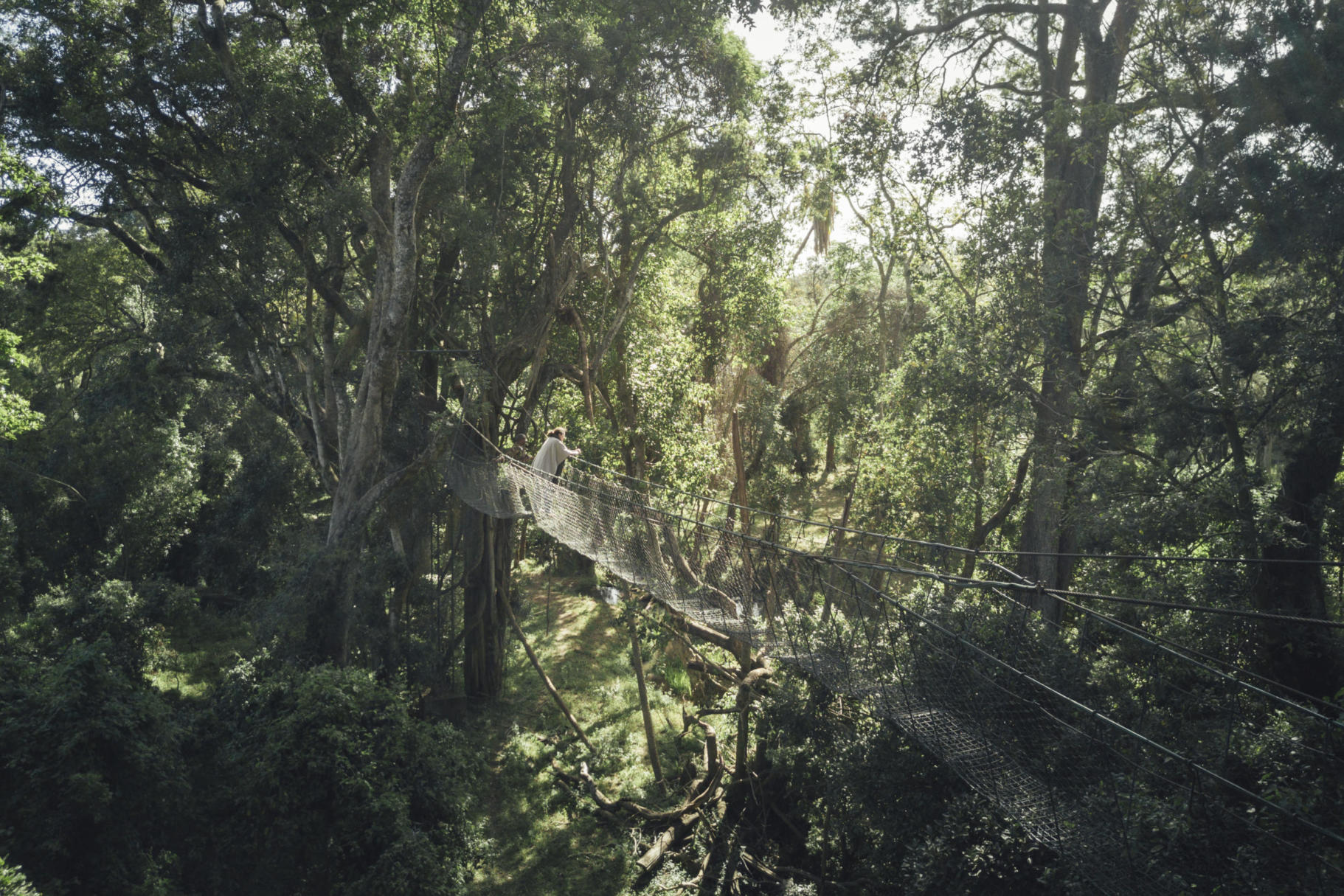 Canopy walkway at ngare Ndare Forest, Kenya