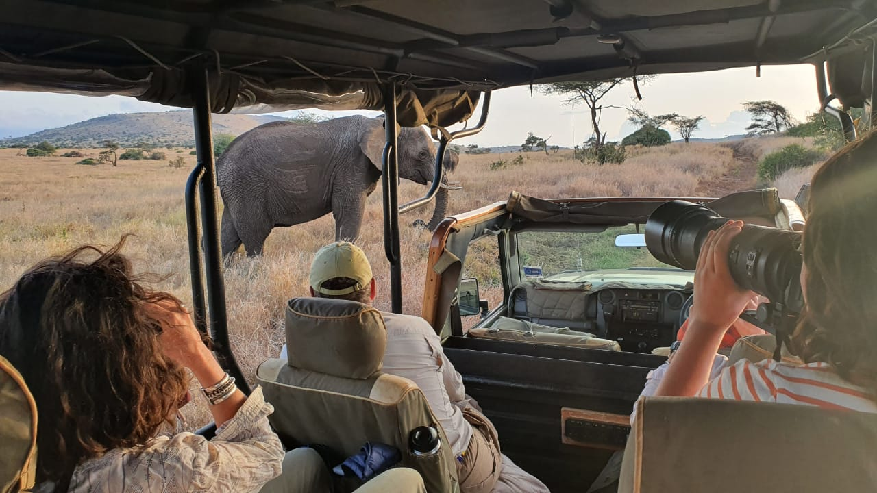 viewing wildlife from an open vehicle