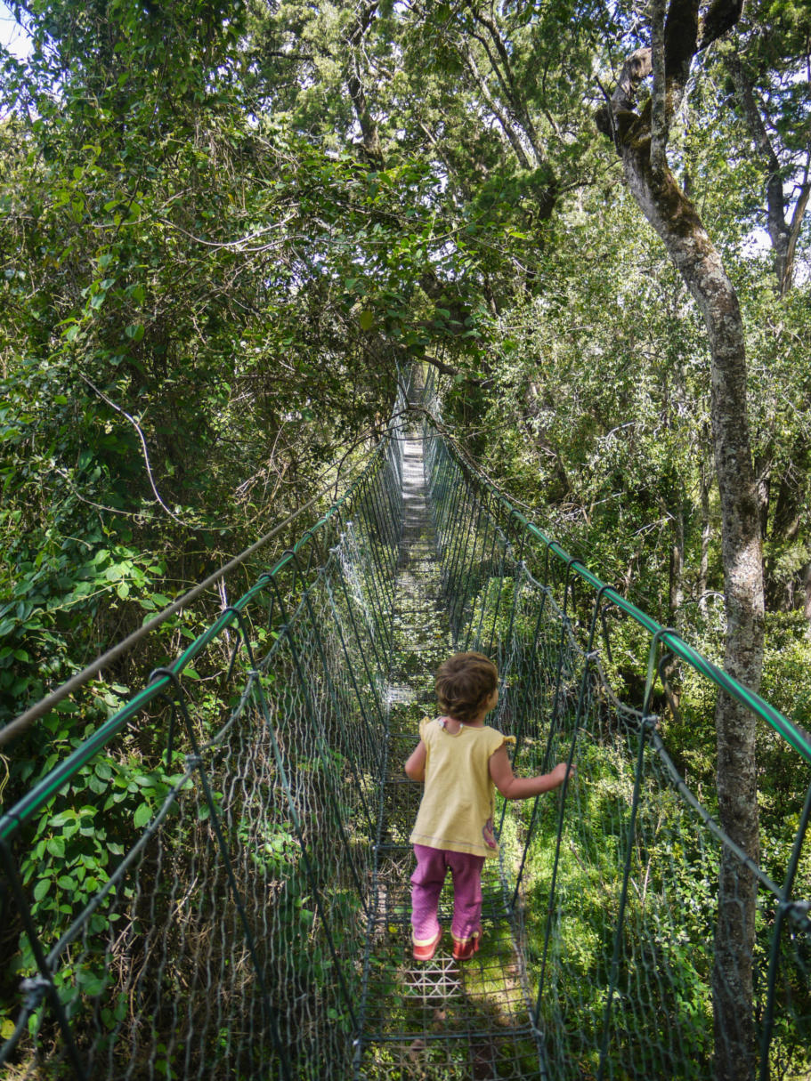 A child on the canopy walkway in the Ngare ndare forest, Kenya