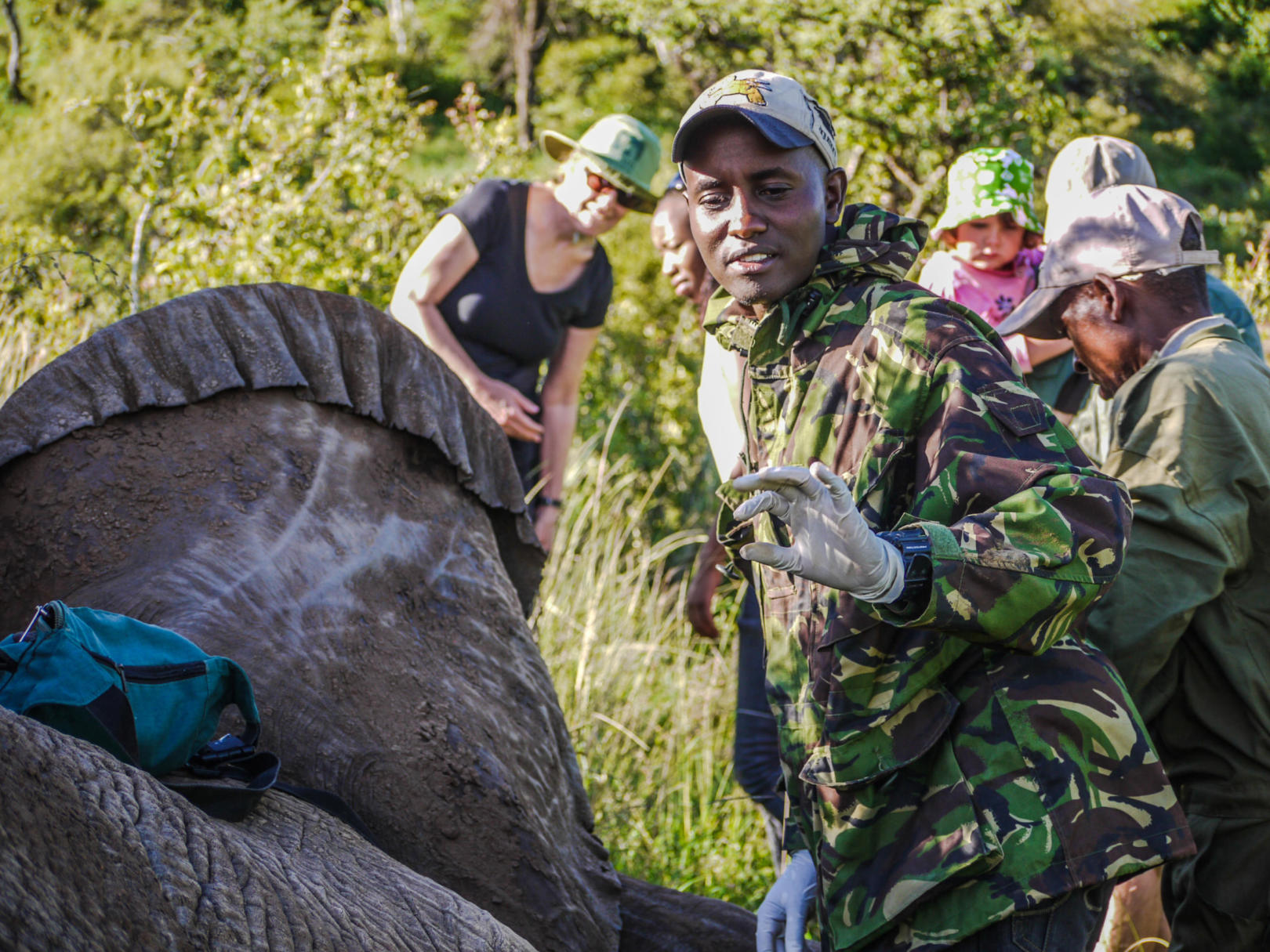 Kenya Wildlife Service vet treating injured elephant